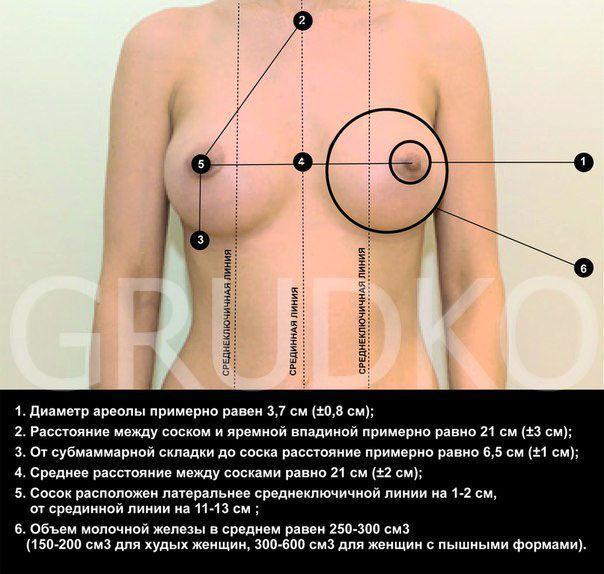 Идеальная женская грудь фото